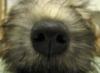 dog, nose