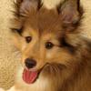 Sheri: Cooper pup