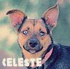Celeste-name