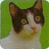 amadeus_amadeus userpic