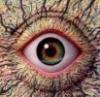 dr_ake userpic