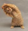 Спортивный кот