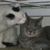 KittyBoys