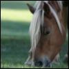 rogue equestrian: NutterButt