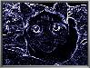 vkitty_85 userpic