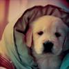в одеяле