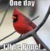 cardinal_rule userpic