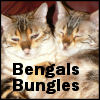 bunn: Bungles