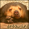 bear userpic