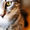 Cats: Pretty tabby