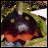 plum face
