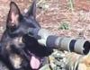 Spotter_Dog
