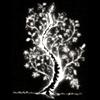 древо Феанора