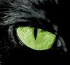 viciouscats