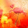 flower - orange