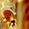 insect - lady bug