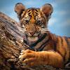 tigra_alive userpic