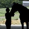 horsetraveller