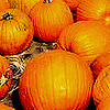 Miss Sophia: Seasonal - Pumpkins