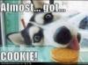 KissofLife: Almost Got Cookie