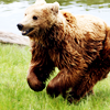 Happy Running Bear