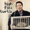 matt_turtle