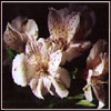 ammre userpic