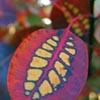 corryn userpic