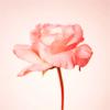 musicdiamond userpic