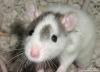 о мышь