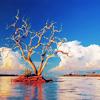 rekindle956: Tree&Clouds