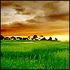 ivorybirdcage userpic