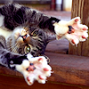cats: cat paws
