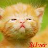 рыжий котенок :)