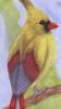 precocious_bird