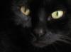 Eyes (ojos)