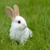it is a bunny