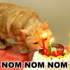 kitty ☯ can has cake nao?