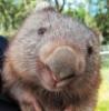batbat_wombat userpic