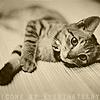 kitty ☯ grey