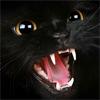 cat in fury