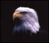 eaglemc userpic