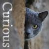 Nuvolanera (aka Rogue): curious cat