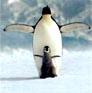 Пингвин + пингвиненок