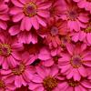 pink // plasticandystar