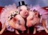 Свинюшки