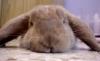 run rabbit! run!