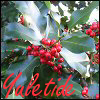 Yuletide, Holly