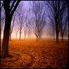 autumn by enriana