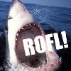 shark rofl